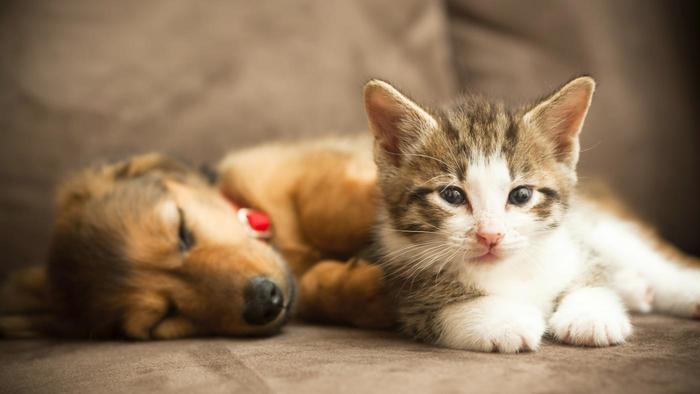 similarities-between-cats-dogs_f6f3c09ab94b83ea
